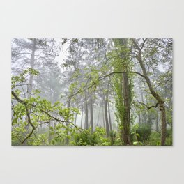 Foggy morning into the dream forest Canvas Print