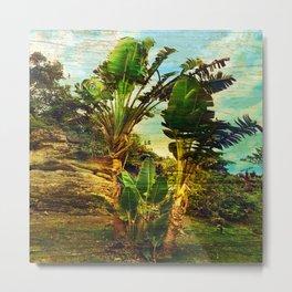Traveller's Palm On Pic Pardis in Saint Martin Metal Print
