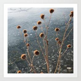 Winter Flora Art Print