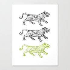 Three Tigers Canvas Print