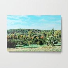 Apple Orchard // Upstate New York Metal Print