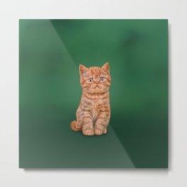 Funny kitten Metal Print