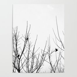 Birds on Branches Poster