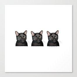 Triple Black Cat on White Canvas Print