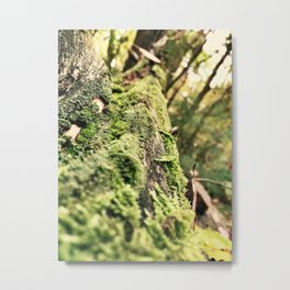 Moss Trails  Metal Print