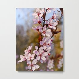 Almond Blossoms in Spring Metal Print