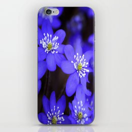 First Spring Flowers in Forest iPhone Skin