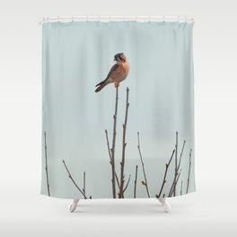 Bird - American Kestrel Shower Curtain