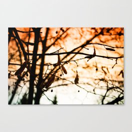 Late Autumn Chill Canvas Print