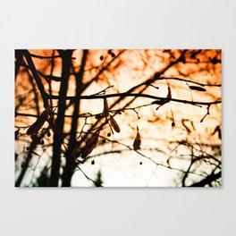 Late Autumn Chill Canvas Print