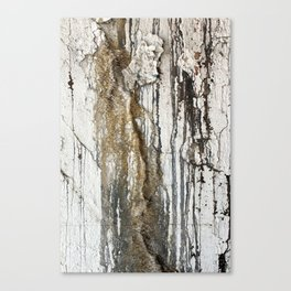 White Decay II Canvas Print