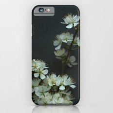 Blackthorn Blossom iPhone 6s Slim Case