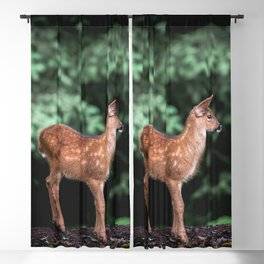 Cute Animals Forest Fawn - Black Tailed Deer Blackout Curtain