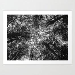 The Dark Forest Path Art Print