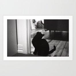 My friends black cat Art Print