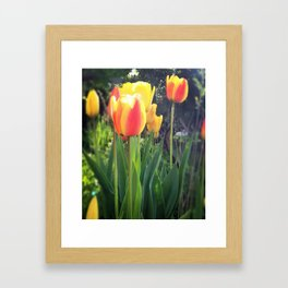 Spring Tulips in Bloom Framed Art Print