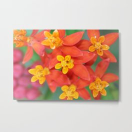 Succulent Red and Yellow Flower II Metal Print