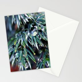 Pine After Rain 2 Stationery Cards
