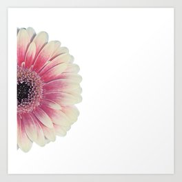 colored summer ~ pink and white gerbera Art Print