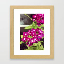 Pretty in Pink Florals Framed Art Print