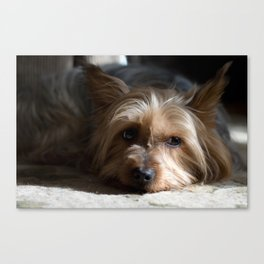 Lazy Kind of Day Canvas Print