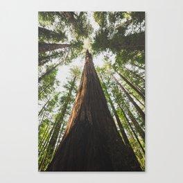 A Big Hendy Woods Redwood Canvas Print
