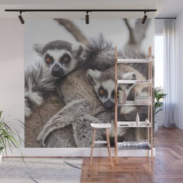 Lemur catta animals Wall Mural