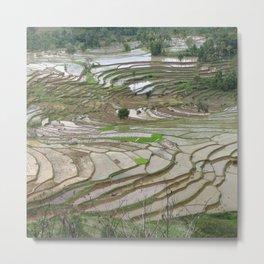 Rice fields terraced terrace Metal Print