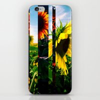 maryland iPhone & iPod Skins featuring Sunflowers in Maryland by kpatron
