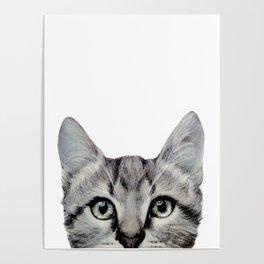Cat, American Short hair, illustration original painting print Poster