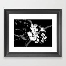 Cape Plumbago Framed Art Print