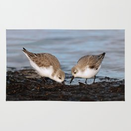 A Pair of Sanderlings Shares: A Meal is Better When Eaten Together Rug