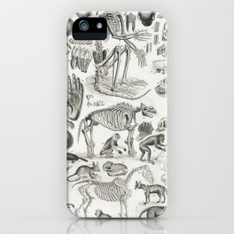 Mammalia from A history of the earth and animated nature (1820) by Oliver Goldsmith (1730-1774)1 iPhone Case