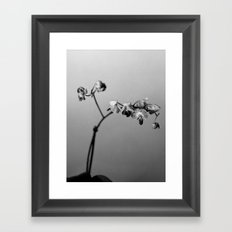 Disgruntled Orchid Framed Art Print