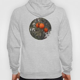 Three oranges on an orange tree Hoody