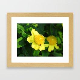 Bursts of Yellow Framed Art Print