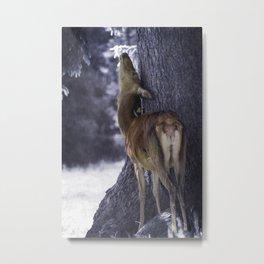 fawn in the mountain Metal Print