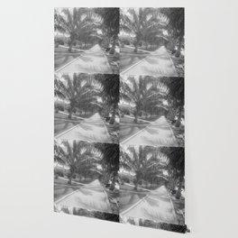 Vintage Black & White Palm Tree Trail Photograph (1897) Wallpaper