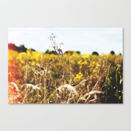 Dehydrated Canvas Print