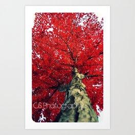 RedAutumnLeaves Art Print
