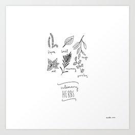 culinary herbs Art Print
