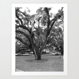 Old Oak Art Print