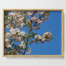 Apple tree blooming in the spring Serving Tray