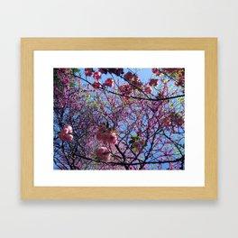 Blossom (2) Framed Art Print