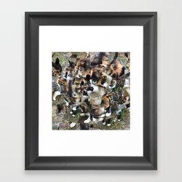 Green Eyed Cat Framed Art Print