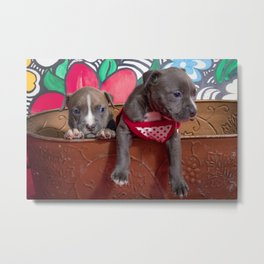 Cute Brother and Sister Pitbull Puppies with Blue Eyes Cuddling Together in a Spring Basket Metal Print