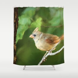Perched Female Cardinal Shower Curtain
