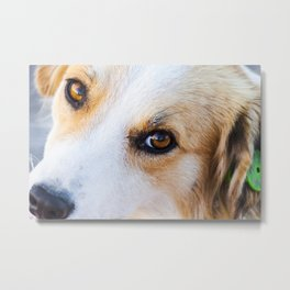 Portrait of a lovely stray dog Metal Print