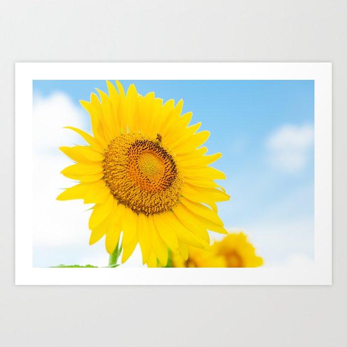 Sunflower and a Bumblebee Art Print