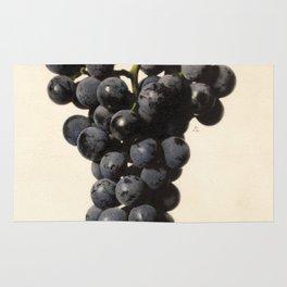 Vintage Concord Grapes Illustration Rug
